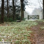marcus_harpur_winter_2011_002
