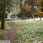 marcus_harpur_winter_2011_009